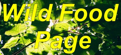Wild Food Page